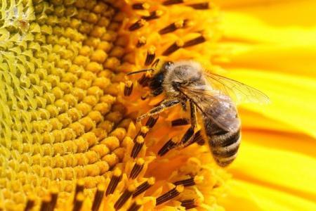 13 tác dụng diệu kỳ của keo ong